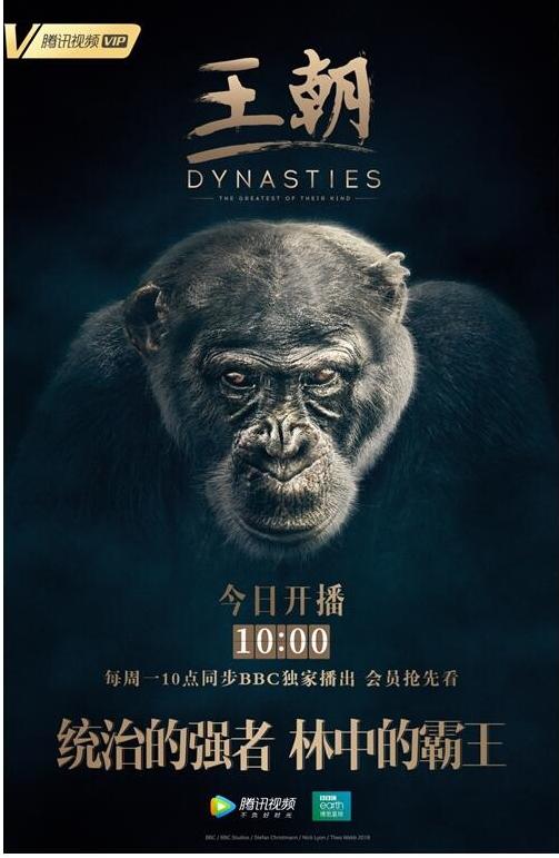 """五大家族角逐动物界""""奥斯卡"""" 腾讯视频独播BBC纪录片《王朝》上线"""